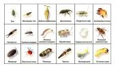 От садовых насекомых вредителей