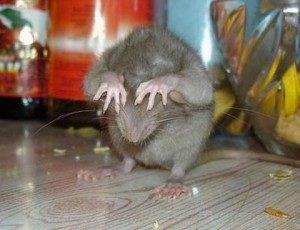 Прибор против мышей